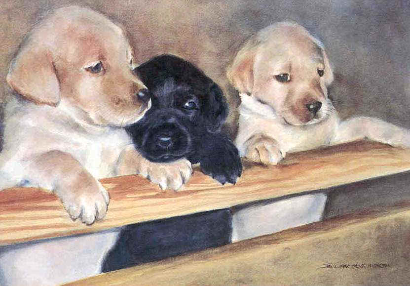 Dafen Oil Painting on canvas -dog014